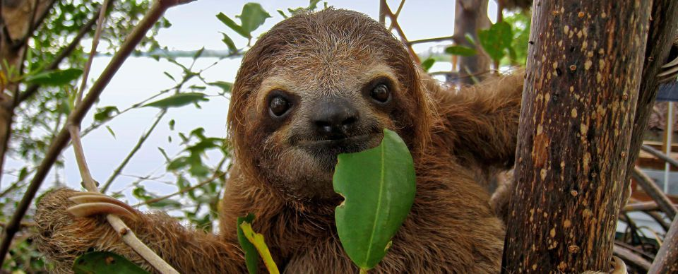 Sloth Cartoon Pbs